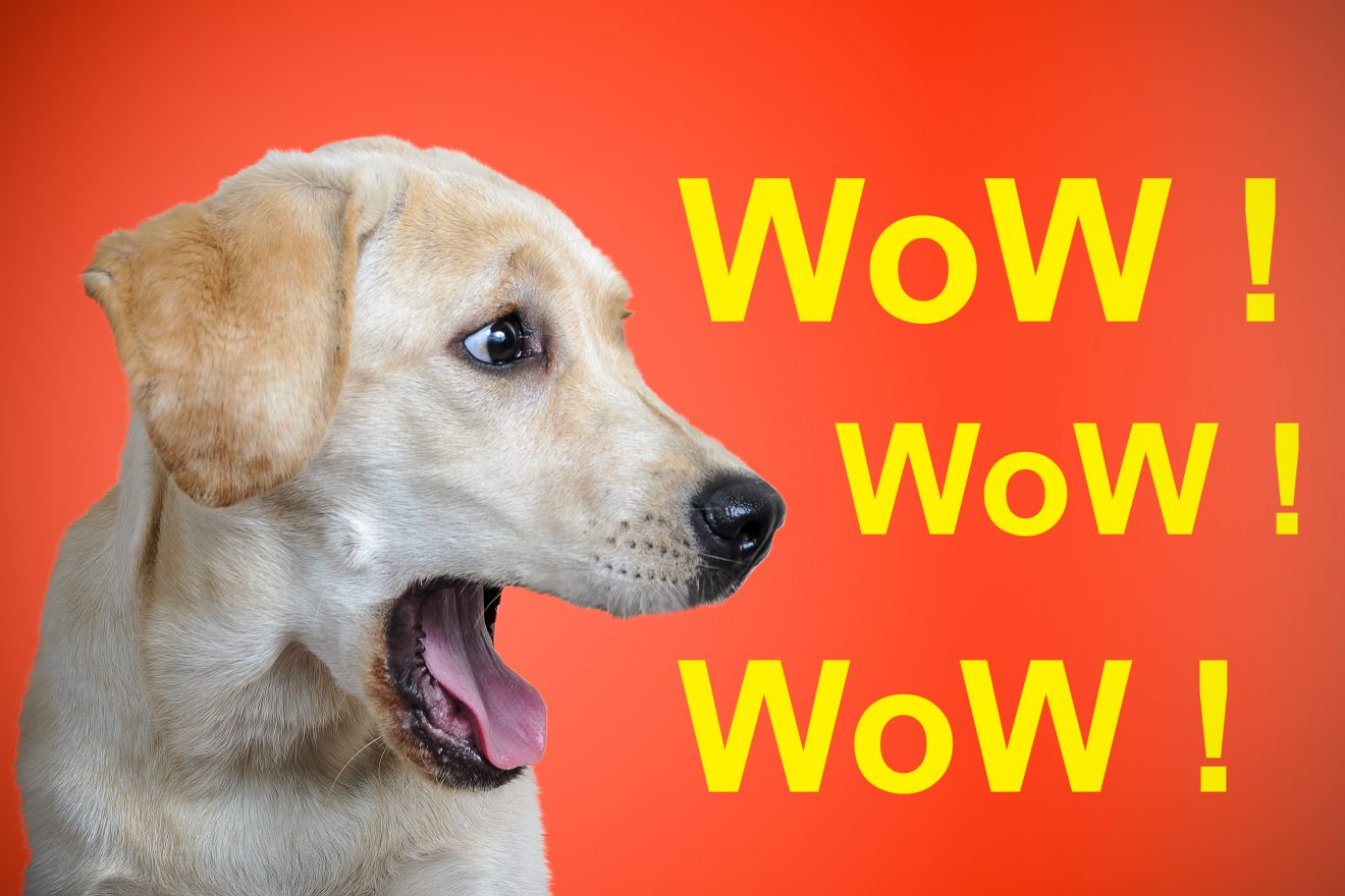 wow inscription, dog breed Labrador, on a festive colored background